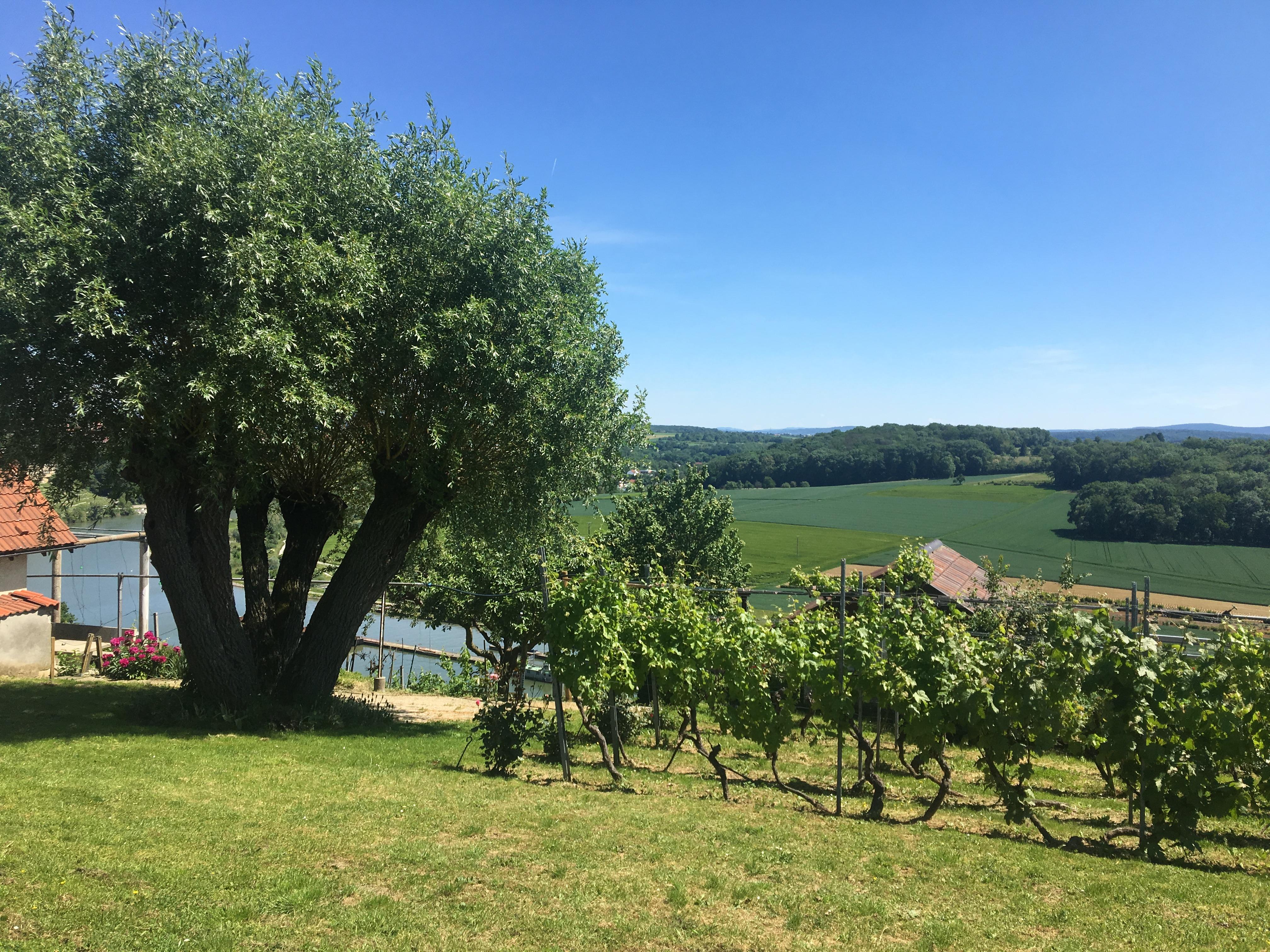 Experiment im Weinberg – die ersten Ludwigsburger Steillagentage 0.1